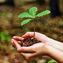 wood-afforestation